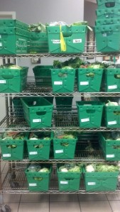 Bins awaiting pick-up by co-op members.