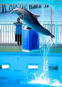 dolphin_jumping_through_hoop_by_carolinerutland-d6keh6u