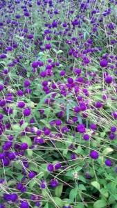 spanish moss trail flowers